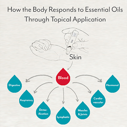 how the body responds to essential oils