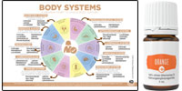 Essential Oils for all your body system