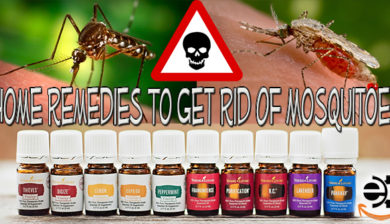 Home remedies with essential oils to get rid of mosquitoes