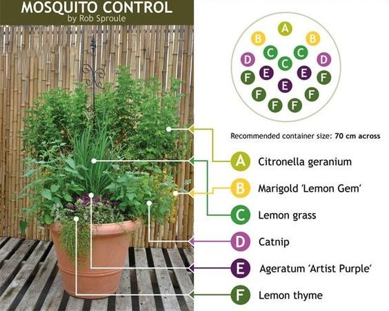 How to get rid of mosquitoes with natural plants