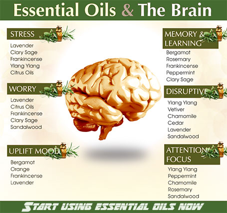 essential oils for the brain