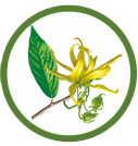 ylang yland essential oil for kids
