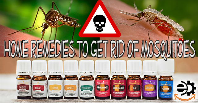 20 Home Remedies to Get Rid of Mosquitoes