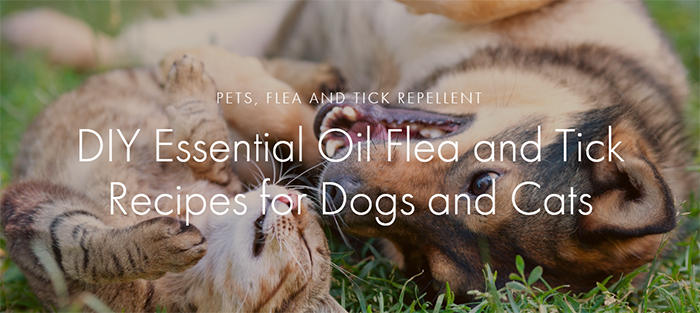 tick repellent for pets with essential oils