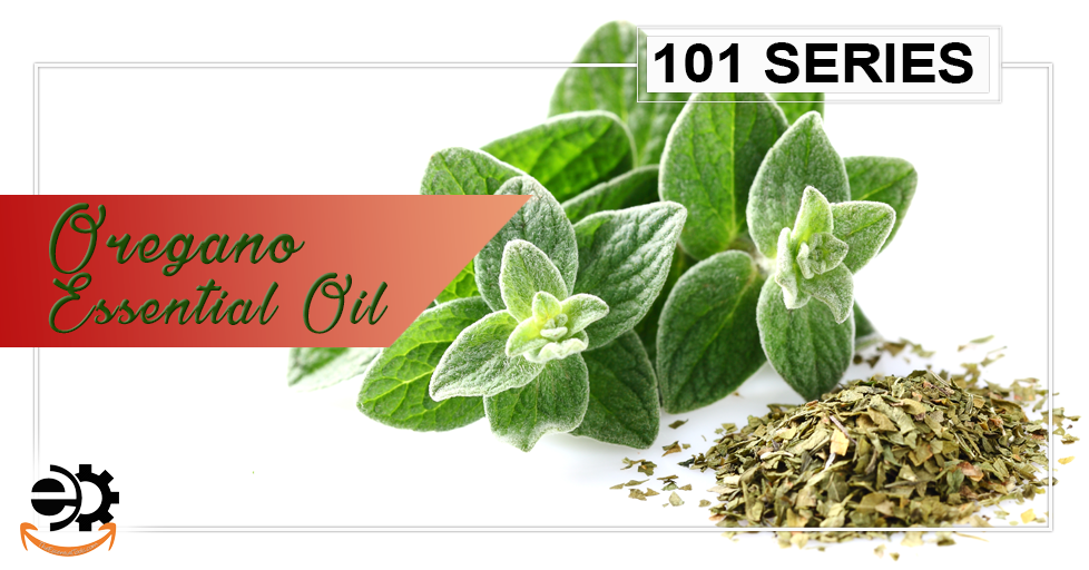 Oregano Essential Oil 101