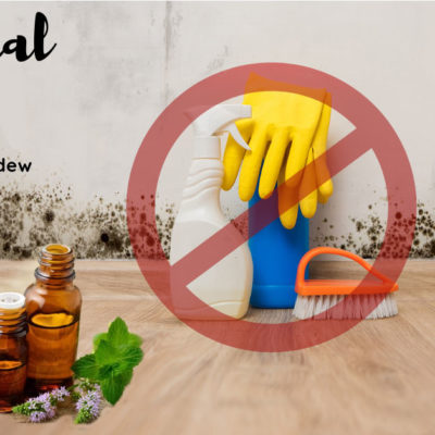Fighting Mold Naturally with 5 Essential Oils