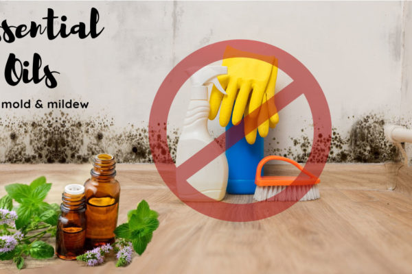 5 Essential oils against mold and mildew