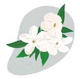 jasmine-essential-oil-for-yoga-chakras