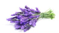 lavender essential oil for yoga