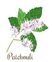patchouli-essential-oil-for-yoga