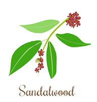 sandalwood essential oil and yoga